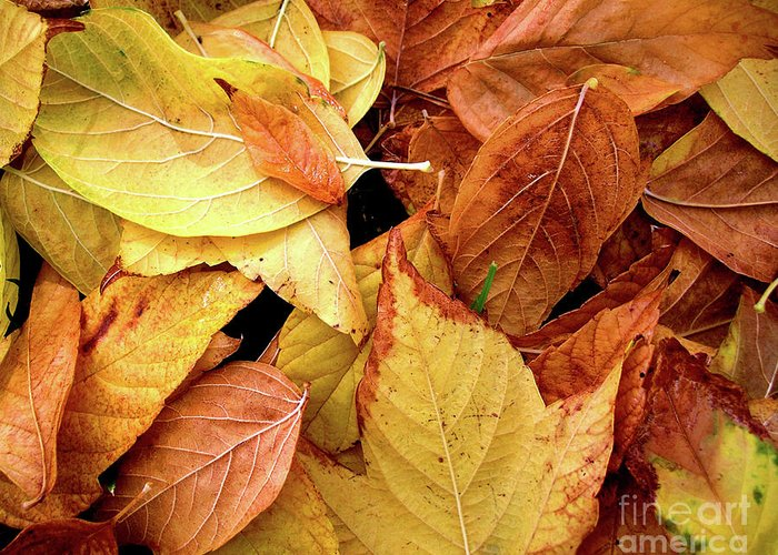 Autumn Greeting Card featuring the photograph Autumn Leaves by Carlos Caetano