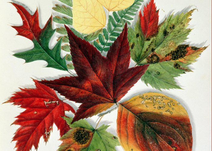 Green Foliage Drawings Greeting Cards