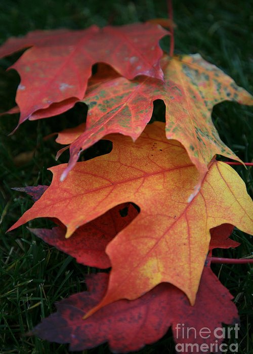 Autumn Greeting Card featuring the photograph Autumn Leaves by Timothy Johnson