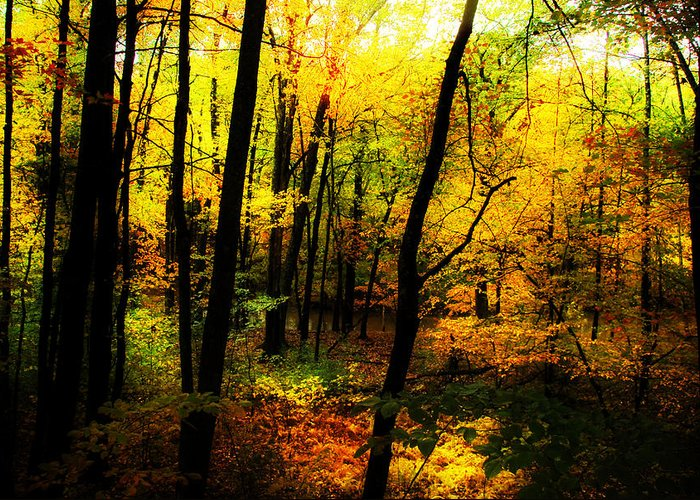 Path Greeting Card featuring the photograph Autumn Light by William Carroll