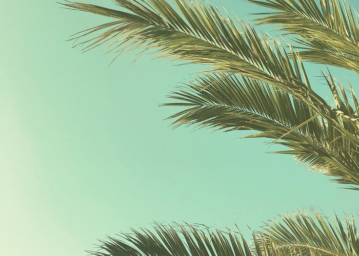 Palm Trees Greeting Card featuring the photograph Autumn Palms II by Cassia Beck