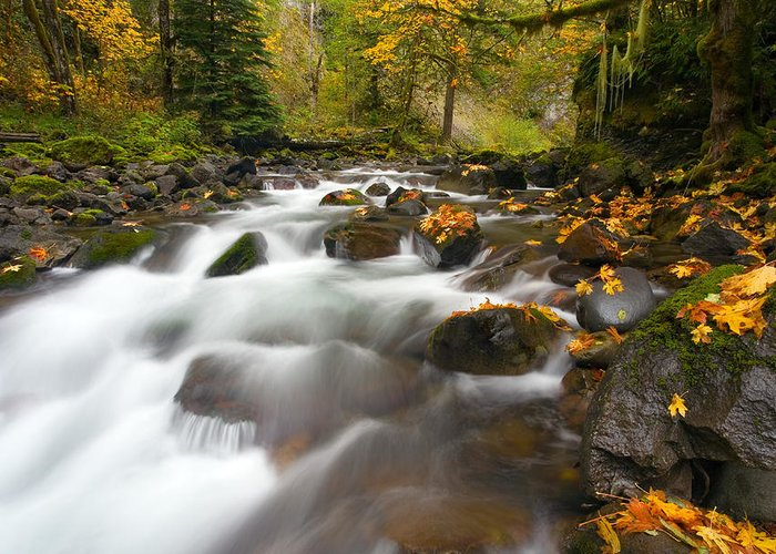 Stream Greeting Card featuring the photograph Autumn Passages by Mike Dawson