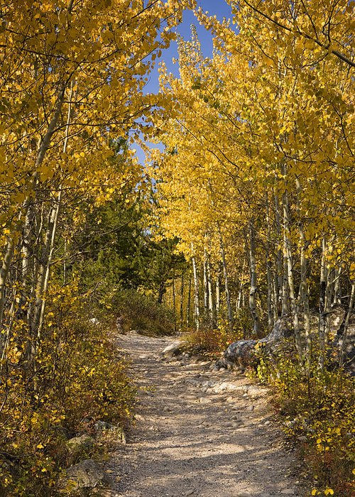 Autumn. Fall Greeting Card featuring the photograph Autumn Path by Andrew Soundarajan