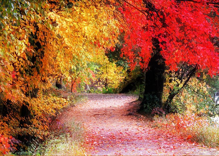 Path Greeting Card featuring the photograph Autumn Path II by William Carroll