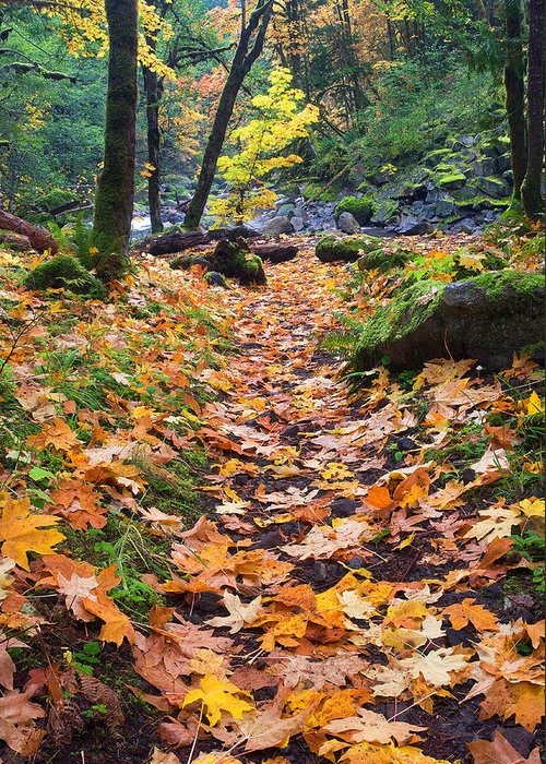 Path Greeting Card featuring the photograph Autumn Path by Mike Dawson