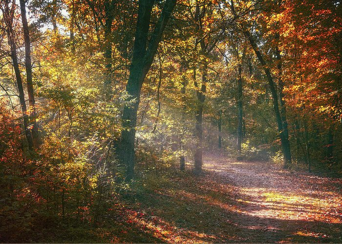 Autumn Greeting Card featuring the photograph Autumn Path by Scott Norris