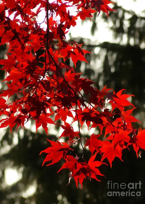 Autumn Greeting Card featuring the photograph Autumn Red by Jeff Breiman