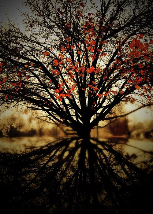 Autumn Greeting Card featuring the photograph Autumn Reflections by MotionOne Studios