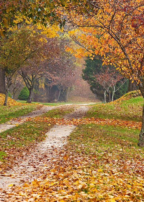 Autumn Greeting Card featuring the photograph Autumn Road by Stephen Sisk