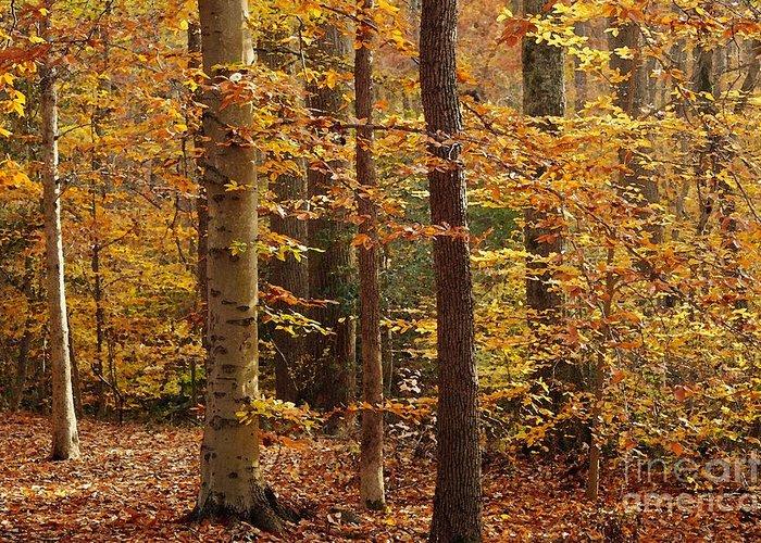 Autumn Greeting Card featuring the photograph Autumn Scenery by Hideaki Sakurai