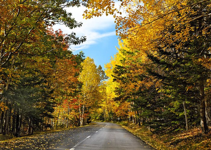 Acadia National Park Greeting Card featuring the photograph Autumn Scenic Drive by George Oze