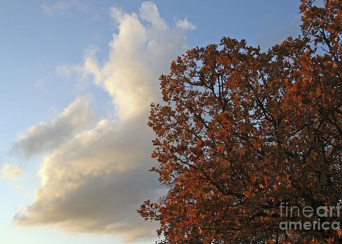 Autumn Greeting Card featuring the photograph Autumn Sky by Jeannie Burleson
