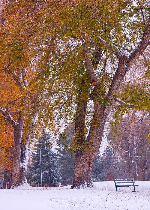 First Snow Greeting Card featuring the photograph Autumn Snow Park Bench  by James BO Insogna