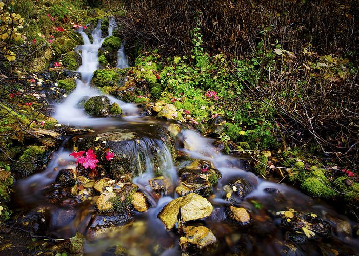 Nature Greeting Card featuring the photograph Autumn Stream by Chad Dutson