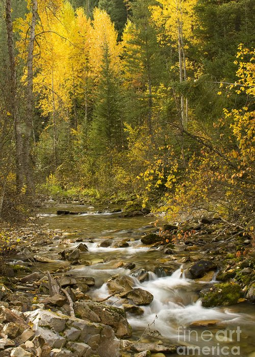 Idaho Greeting Card featuring the photograph Autumn Stream by Idaho Scenic Images Linda Lantzy