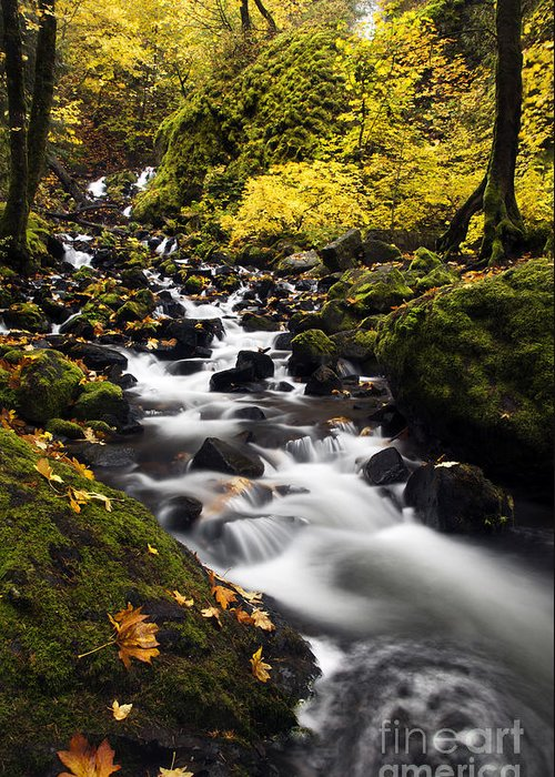Starvation Creek Greeting Card featuring the photograph Autumn Swirl by Mike Dawson