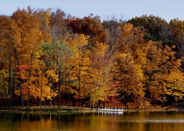 Autumn Trees Greeting Card featuring the photograph Autumn Trees by Sandy Keeton