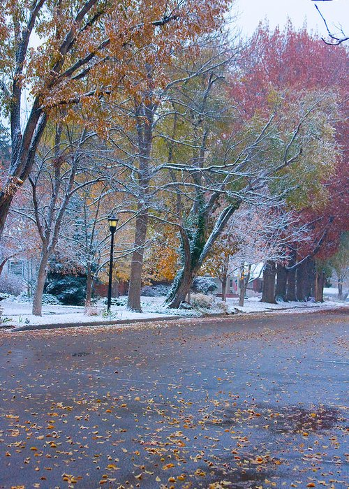 Street Greeting Card featuring the photograph Autumn Winter Street Light Color by James BO Insogna