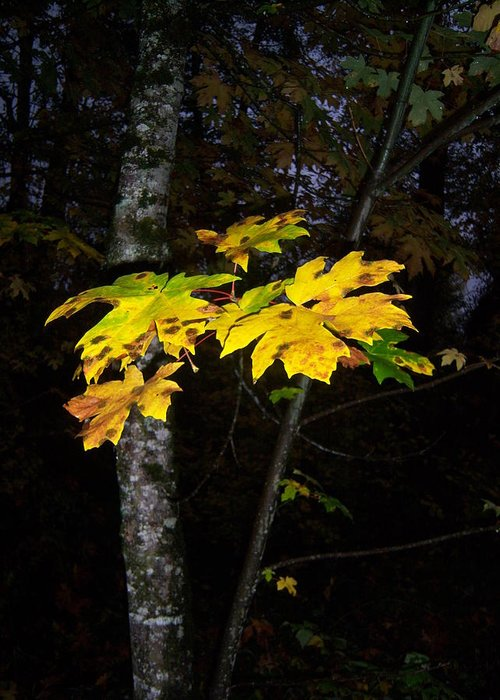 Autumn Greeting Card featuring the photograph Autumn Yellow by Ken Day