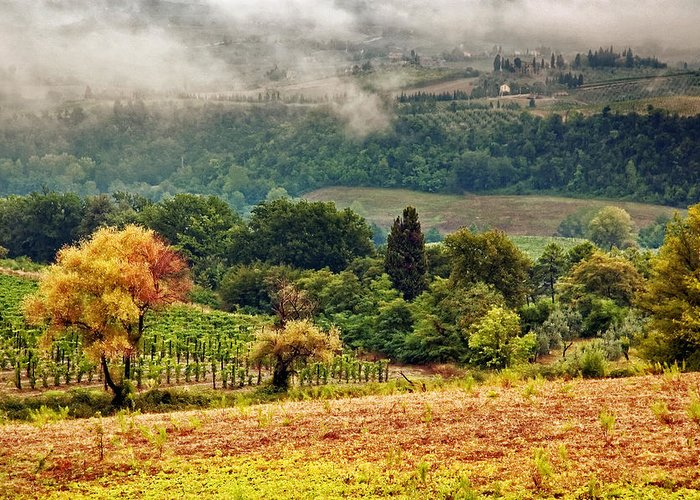 Fall Greeting Card featuring the photograph Autumnal Hills by Silvia Ganora