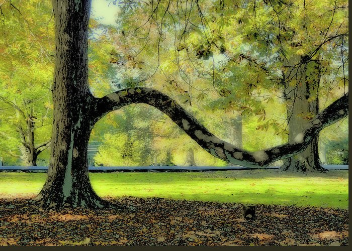 Autumn Greeting Card featuring the photograph Autumns Bench by JAMART Photography