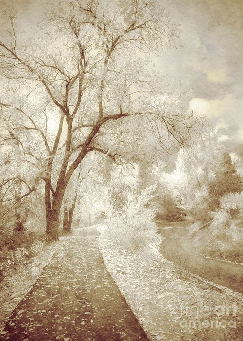 Path Greeting Card featuring the photograph Autumn's Last Breath by Tara Turner