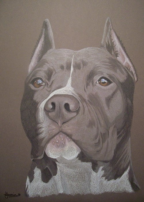 Pit Bull Greeting Card featuring the drawing Axl by Stacey Jasmin