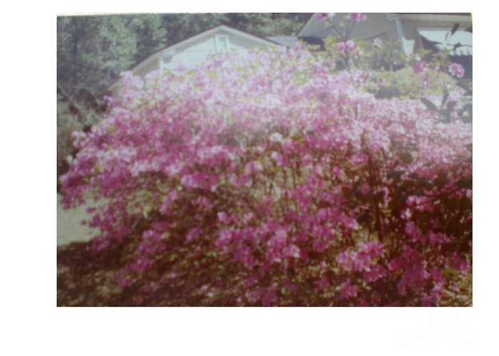 Azalea's Greeting Card featuring the photograph Azalea Framed By Roof by Hal Newhouser