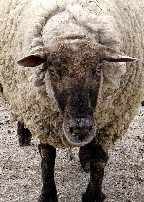 Sheep Greeting Card featuring the photograph Baa Baa by Jean Haynes