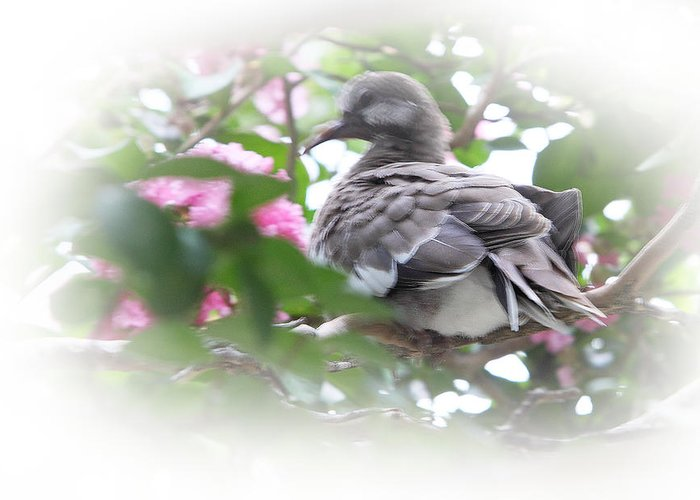 Baby Greeting Card featuring the photograph Baby Bird In Crape Myrtle Tree by Linda Phelps