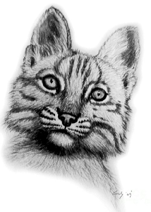 Baby Kitten Drawings Greeting Cards
