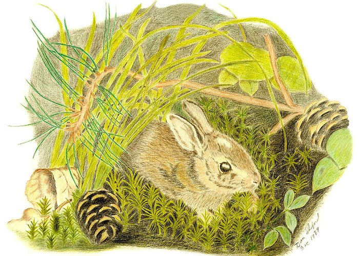 Rabbit Greeting Card featuring the drawing Baby Bunny Down For The Night by Daniel Shuford