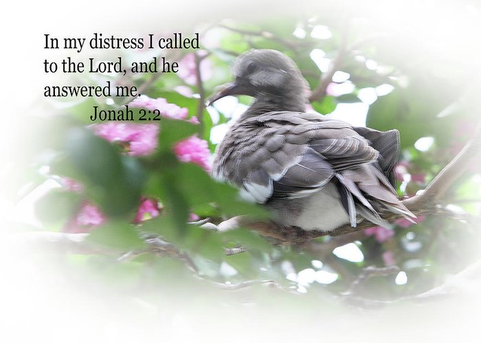Scripture Greeting Card featuring the photograph Baby Dove Jonah 2 V 2 by Linda Phelps