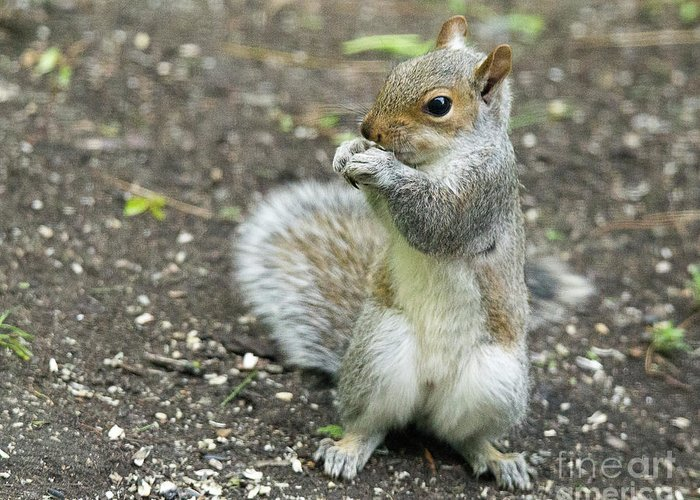 Baby Greeting Card featuring the photograph Baby Squirrel by Laurie Pocher