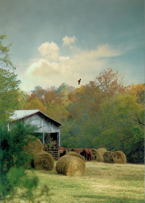 Landscapes Greeting Card featuring the photograph Back At The Barn Again by Jan Amiss Photography
