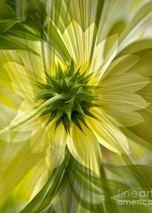 Floral Greeting Card featuring the photograph Back Petal by Chuck Brittenham