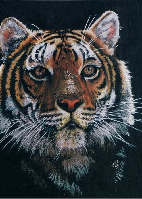 Tiger Greeting Card featuring the drawing Backlit Tiger by Barbara Keith