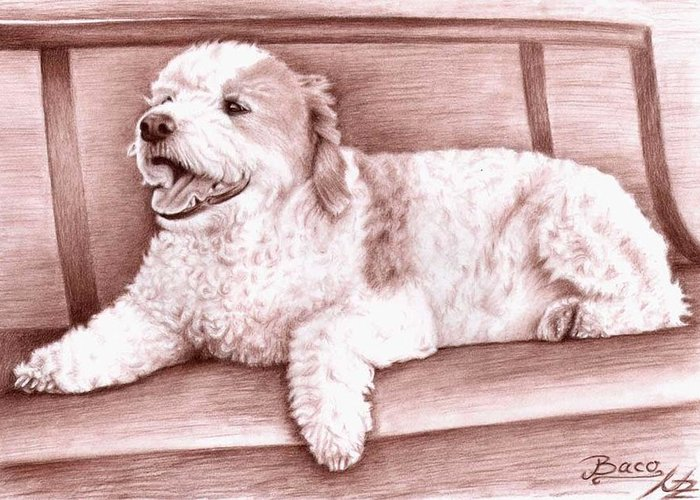 Dog Greeting Card featuring the drawing Baco by Nicole Zeug