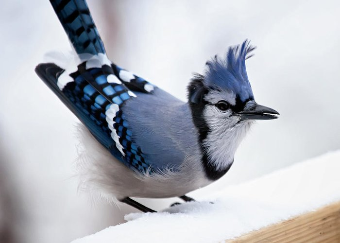 White Bird Greeting Cards