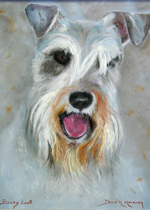 Schnauzer Greeting Card featuring the painting Bailey by David Horning