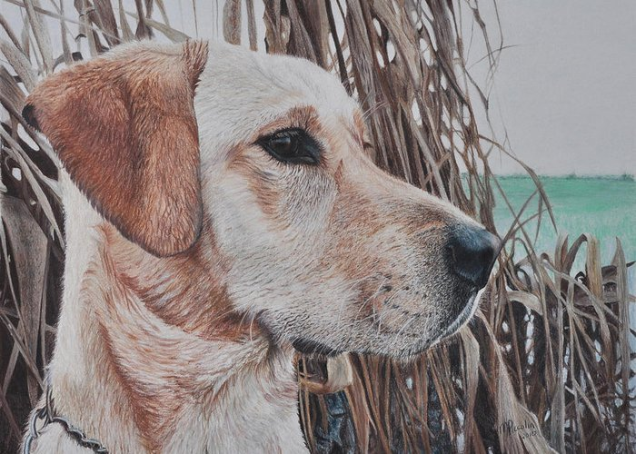 Dog Greeting Card featuring the drawing Bailey by Marlene Piccolin