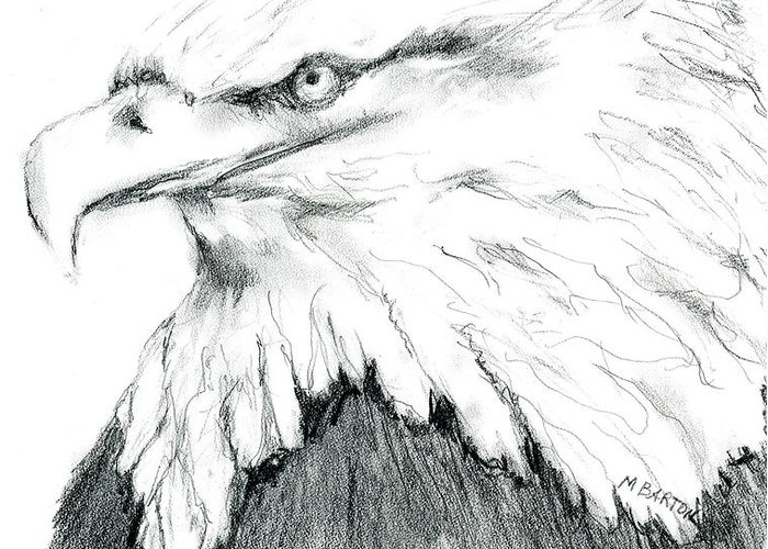 Eagle Greeting Card featuring the drawing Bald Eagle by Marilyn Barton