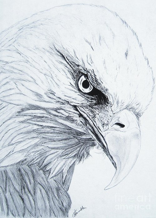 Pencil Drawing Greeting Card featuring the drawing Bald Eagle by Nancy Rucker