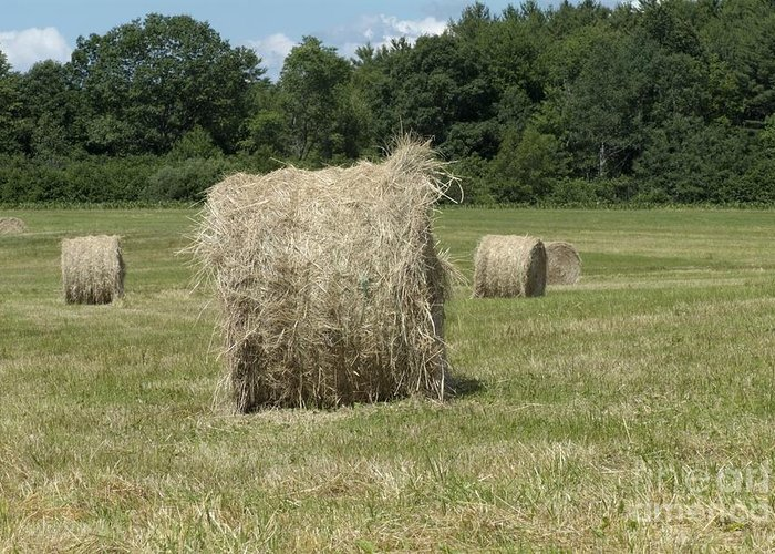 Hay Greeting Card featuring the photograph Bales Of Hay In New England Field by Erin Paul Donovan