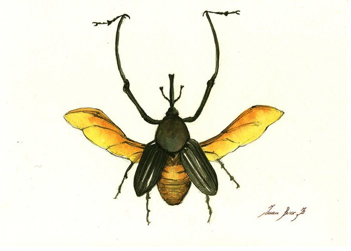 Beetle Greeting Cards
