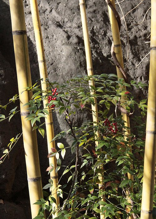 Bamboo Greeting Card featuring the photograph Bamboo by Linda A Waterhouse