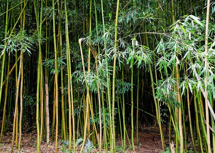 Bamboo Wind Chimes Greeting Card featuring the photograph Bamboo Wind Chimes Waimoku Falls Trail Hana Maui Hawaii by Michael Bessler