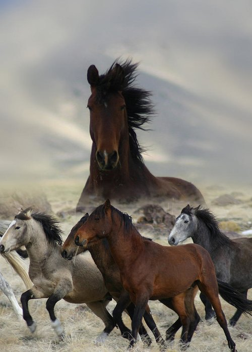 Horse Greeting Card featuring the photograph Band Of One by Gene Praag