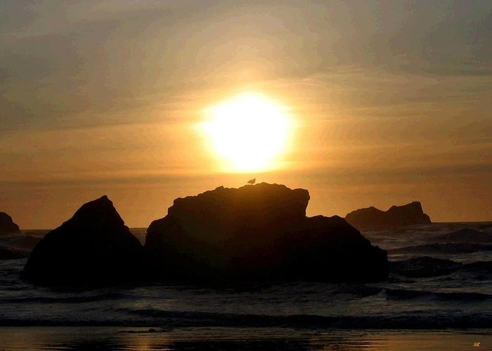 Seagull Greeting Card featuring the digital art Bandon Beach Silhouette by Will Borden