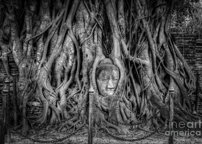 Ayutthaya Greeting Card featuring the photograph Banyan Tree by Adrian Evans